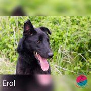 Erol -Prachtkerl sucht liebevolle Menschen