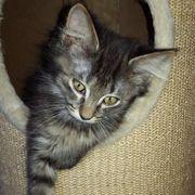 Katzenmädchen Fiore wartet auf ihre