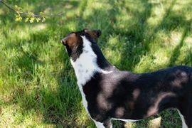 Hunde - Ellen Zora - Diese Hündin will