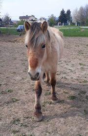 Pferd sucht Freund in