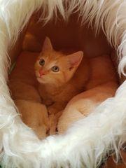 Katerchen Babykatze 10 Wochen jung