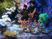 Verschiedene Korallen Meerwasser