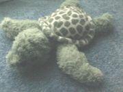 Spielzeug - Plüschtier - Plüsch - Schildkröte - Flo