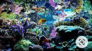 Suche Meerwasser Korallen Fische