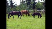 Freie Pferdestellplätze