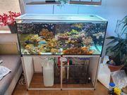 300l Meerwasser Aquarium Korallen Fische