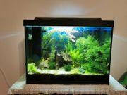 Tetra Aquarium 80 Liter Komplettset
