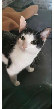 Katze ca 1 5 Jahre