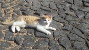 Katzen von Mai fotos auf