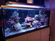Meerwasser Aquariumauflösung Abschäumer Strömungspumpen Technik