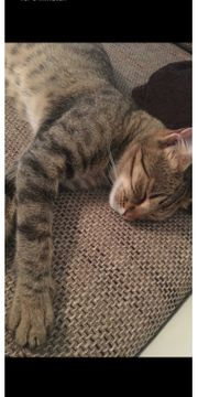 Katze weiblich zirka 1 5