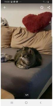 2 Katzendamen suchen Zuhauses