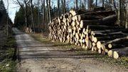 Esche oder Buche Stammholz
