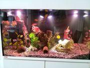 Eheim 300 Liter Aquarium Besatz