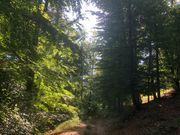 Wald Forstfläche