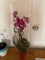 Orchideen Tomaten Himbeeren Erdbeeren Pflanzen