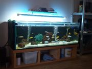 400 liter aquarium mit buntbarsche