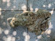 Riffgestein Totgestein aus Meerwasseraquarium WYSIWYG
