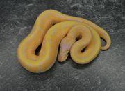 1 0 Fire Banana Pinstripe