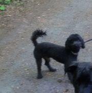 Hund entlaufen vermisst gesucht gestohlen