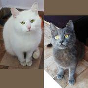 Schmusekatzen Samson und Wilma suchen