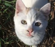 Friny wundervolle Katzendame ca 3