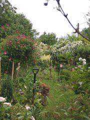 Familie sucht Garten in Waldenbuch
