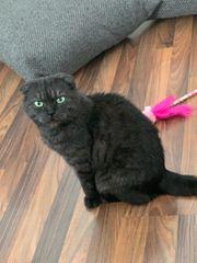 DRINGEND Katze sucht neues Zuhause