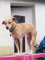 Hund aus Helmstadt