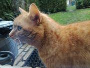 Kleiner weiblicher Garfield