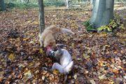 75- Ganzwöchige ganztägige Hundebetreuung Hundesitting