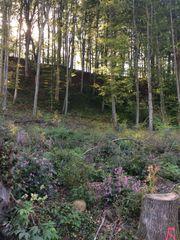 Hanggrundstück mit Buchenwald