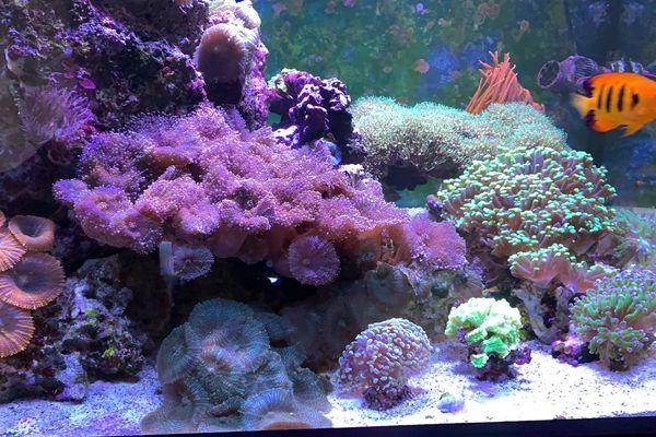 Suche Meerwasser Korallen Fische Aquarium