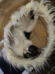 Babykatze Mia mit Handicap