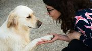 Tierkommunikation Basisseminar
