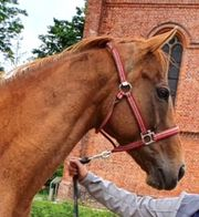Pferdeboxen Pferdestall