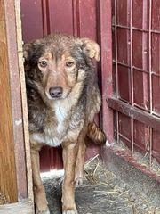 Süße Hundedame sucht ihr Für-immer-Zuhause