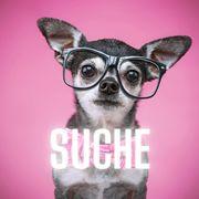 SUCHE typvollen MINI LH Chihuahua