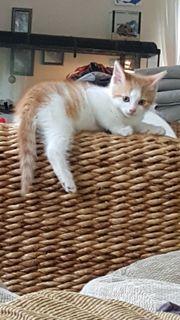 kitten suchen ab sofort neues