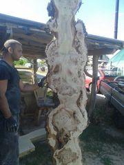 Getrocknetes Schnittholz aus Topolya - Pappelholz