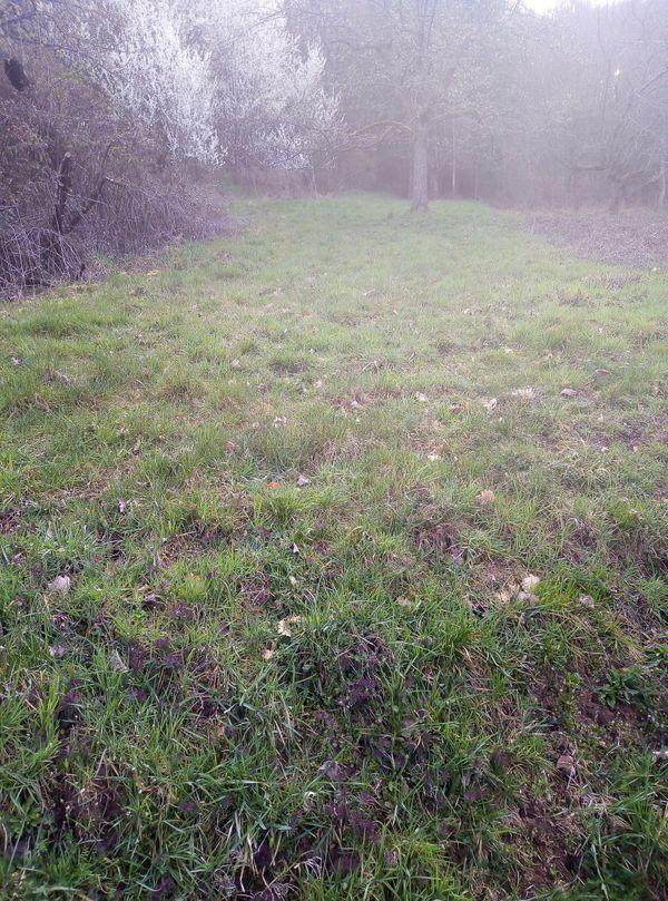 Grundstück Garten Scheune Bauernhof oder