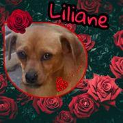 Zaubermaus Liliane