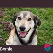 Bernie - Verspielter Teenager sucht Zuhause
