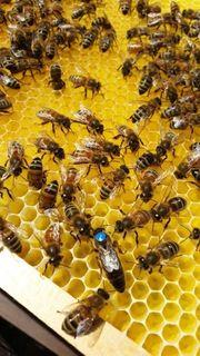 Bienen Ableger 2020