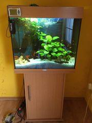 Verkaufe mein Aquarium