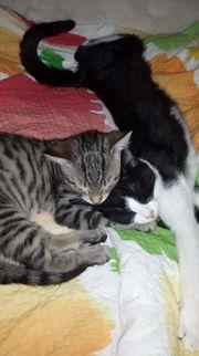 2 Katzenmädchen