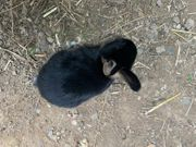 Kaninchenbaybs