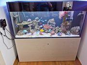 600 Liter Meerwasser Aquarium komplett
