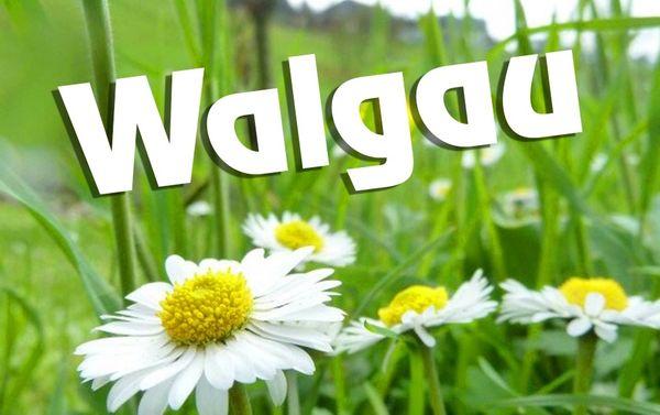 Suche Grundstück im Walgau