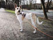 Hundejunge Thunder sucht sportliches Zuhause